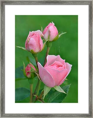 Pink And The Buds Framed Print