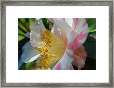 Pink And White Floral Framed Print by Aimee L Maher Photography and Art Visit ALMGallerydotcom