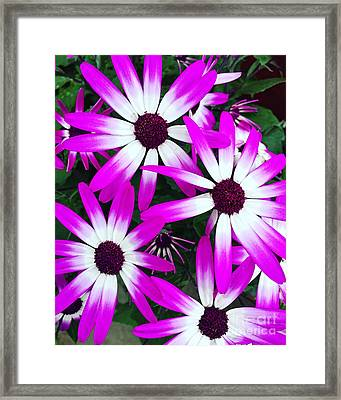 Pink And White Flowers Framed Print