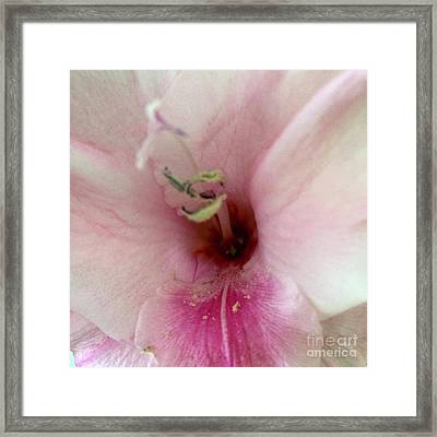 Pink And White Glad Framed Print
