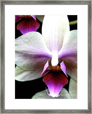 Pink And White Phalanopsis Orchid Flower . 7d5746 Framed Print by Wingsdomain Art and Photography