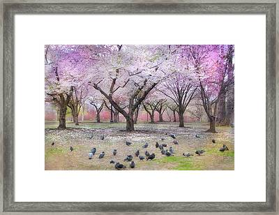 Pink And White Spring Blossoms - Boston Common Framed Print