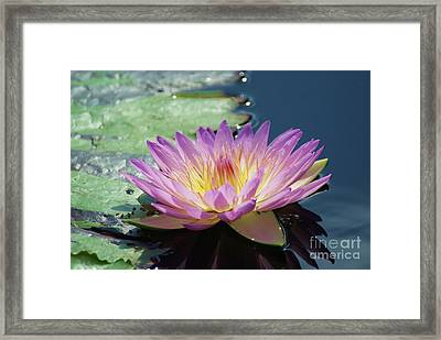 Pink And Yellow Lily   # Framed Print
