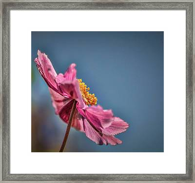 Pink And Yellow Profile #h8 Framed Print