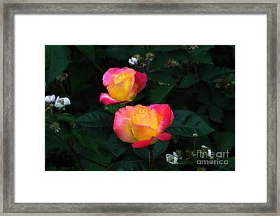 Pink And Yellow Rose With Raspberrys Framed Print