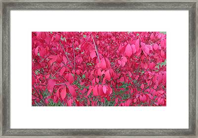 Pink Framed Print by Andrea Kilbane