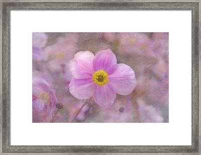Pink Anemone Framed Print by Lena Photo Art