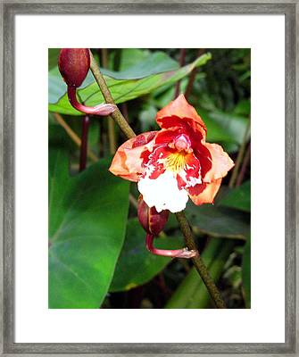 Pink Angel Framed Print by Mindy Newman