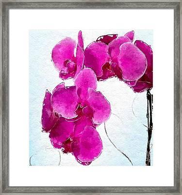 Pink Appeal Framed Print