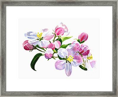 Pink Apple Blossoms Framed Print by Sharon Freeman