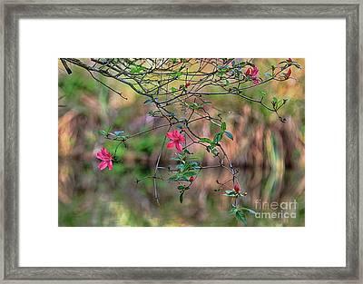 Framed Print featuring the photograph Pink Azalea Dream by Deborah Benoit