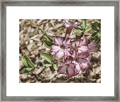 Pink Azalea II Framed Print