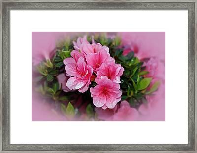 Pink Azaleas Framed Print by Sandy Keeton