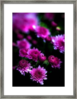 Framed Print featuring the photograph Pink Beauty by Cherie Duran