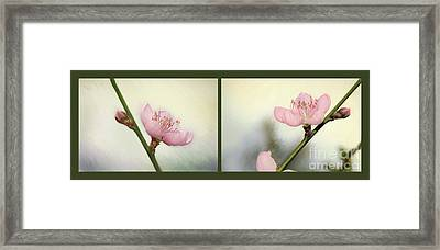 Pink Blossom Collage By Kaye Menner Framed Print