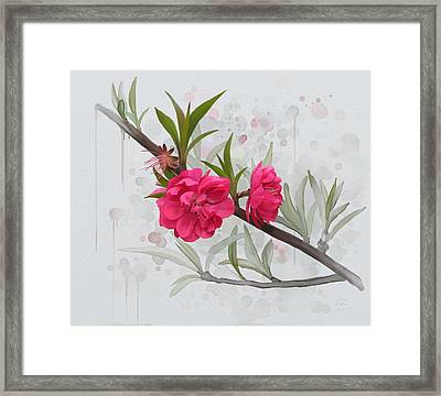 Hot Pink Blossom Framed Print by Ivana Westin