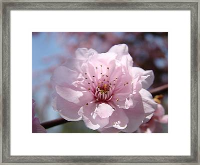Pink Blossom Nature Art Prints 34 Tree Blossoms Spring Nature Art Framed Print by Baslee Troutman