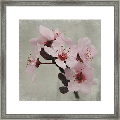 Pink Blossoms 1- Art By Linda Woods Framed Print