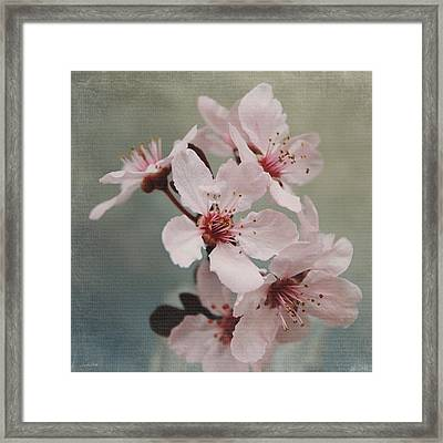 Pink Blossoms 2- Art By Linda Woods Framed Print