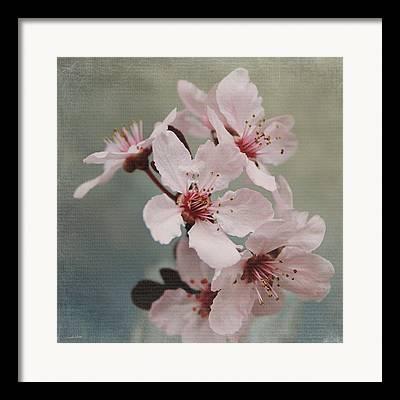 Cherry Blossom Mixed Media Framed Prints