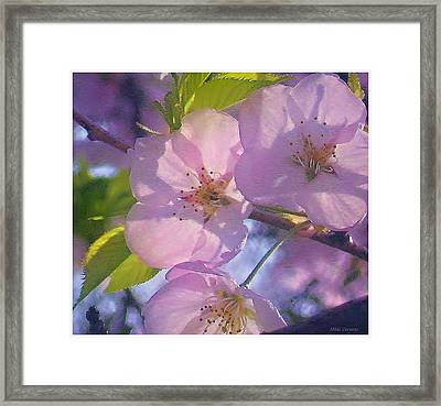 Pink Blossoms 2 Framed Print by Mikki Cucuzzo