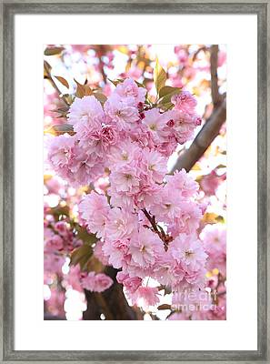 Pink Blossoms Beauty Framed Print