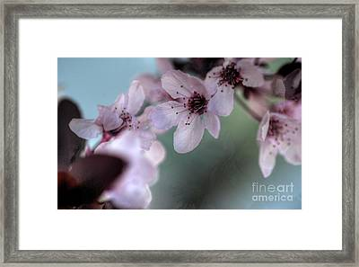 Framed Print featuring the photograph Pink Blossoms by Jim and Emily Bush