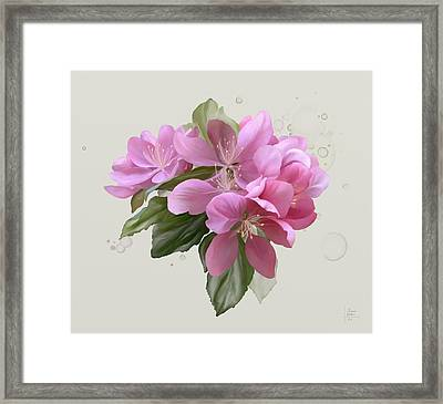 Pink Blossoms Framed Print by Ivana Westin
