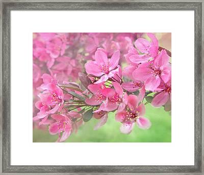 Pink Blossoms Framed Print by Art Spectrum