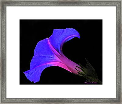 Pink Blue Flower Framed Print by Chaza Abou El Khair