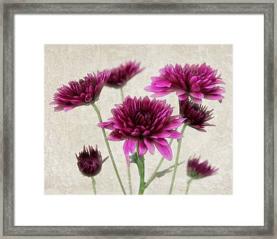 Pink Bouquet Framed Print by Judy Vincent
