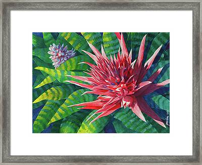 Pink Bromeliad With Pup Framed Print
