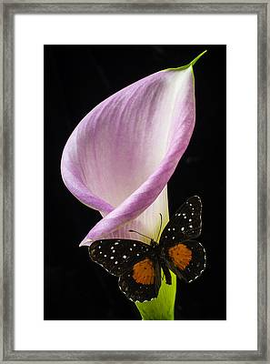 Pink Calla Lily With Butterfly Framed Print