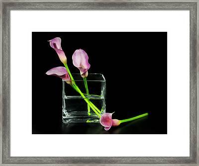 Pink Callas Framed Print