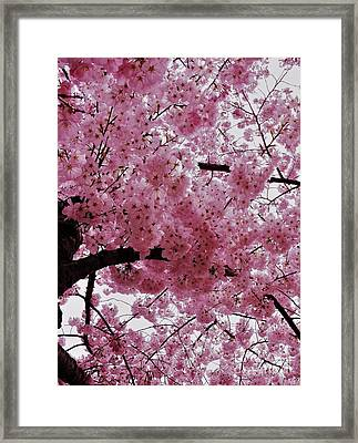 Pink Canopy Framed Print