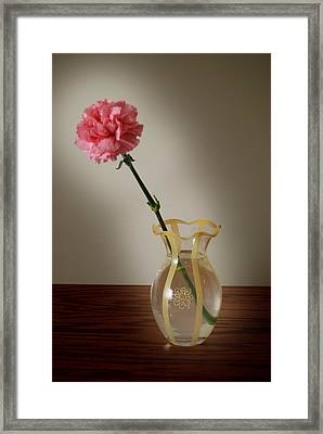 Pink Carnation Framed Print by Dave Chafin