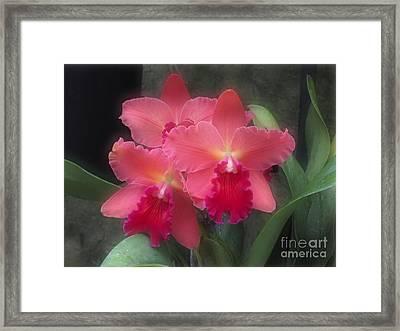 Pink Cattleya Framed Print by Addie Hocynec
