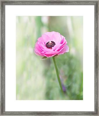 Pink Center Framed Print by Rebecca Cozart