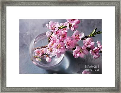Pink Cherry Blossom Framed Print