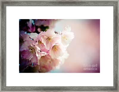 Pink Cherry Blossoms Closeup Framed Print