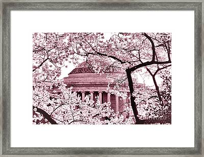 Pink Cherry Trees At The Jefferson Memorial Framed Print