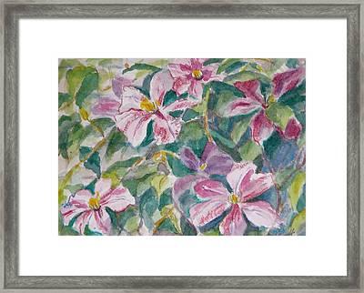 Pink Clematis Framed Print by Jan Bennicoff