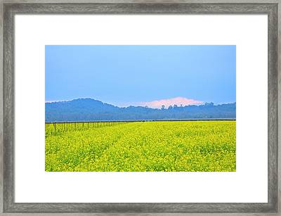 Pink Cloud Over The Mustard Fields Framed Print by Tom Reynen