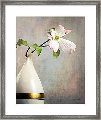 Pink Cornus Kousa Blossom In Creamer Framed Print