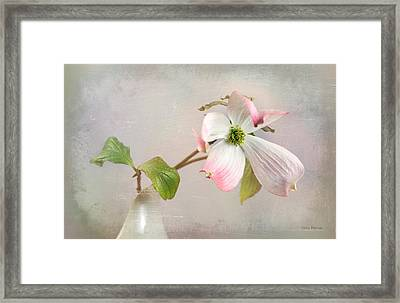 Pink Cornus Kousa Dogwood Blossom Framed Print by Betty Denise