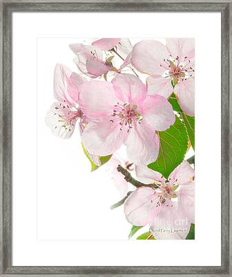 Pink Crabapple Blissoms Framed Print