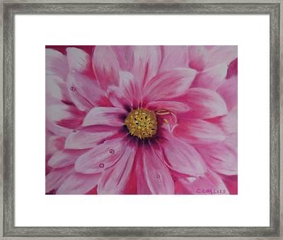 Pink Dahlia I Framed Print