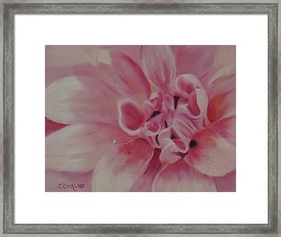 Pink Dahlia II Framed Print