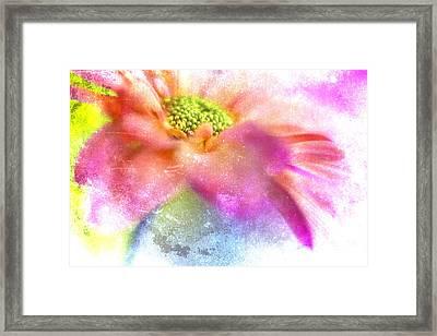 Pink Daisy On Blue Framed Print