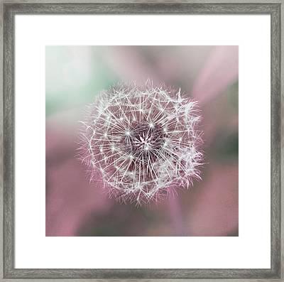 Pink Dandelion Framed Print